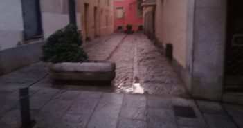 Limpieza Jornada 45 - Calle Paisajista Borrel